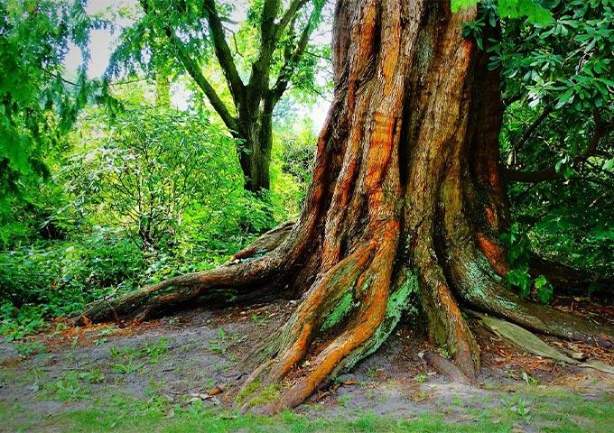 Baum Schlossgarten Oldenburg