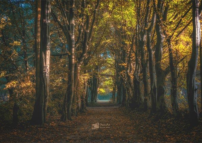 Floetenteich Park