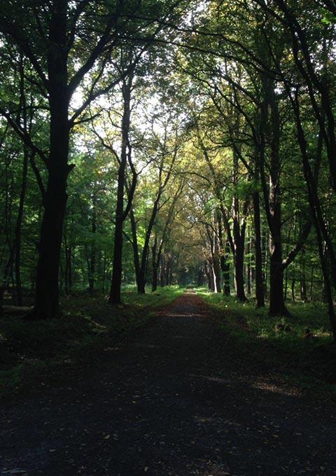 Wald in Hude